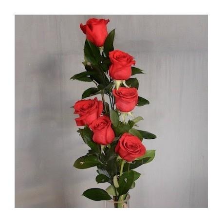 Media Rosas